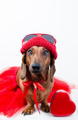 Stylish dog in red suit — Stock Photo