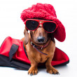 Stylish dog — Stock Photo #22712889