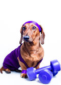 Dog and sports — Stock Photo