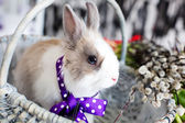 Easter rabbit — Foto Stock