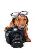 Dog with camera — Stock Photo