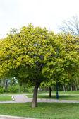 Park tree — Stock Photo