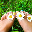 Female legs in daisies — Stock Photo #27280645