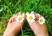 Female legs in daisies — Stock Photo