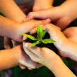 Young plant in childrens hands — Stock Photo