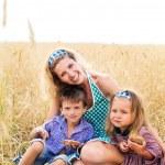 Summer day on wheat field — Stock Photo
