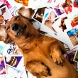 Cute dog among the photos — Stock Photo #40955817