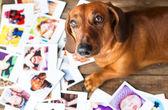 Cute dog among the photos — Stock Photo