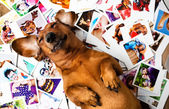 Cute dog among the photos — Stock Photo
