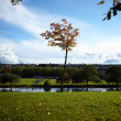 Tree near the water of river in sunny autumn day — Stock Photo #14231525