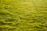 Green grass background texture — Stock Photo