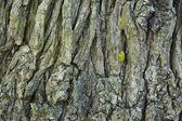 Arka plan ağaç kabuğu — Stok fotoğraf