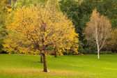 Colourful trees in park — Stock Photo