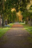 Percorso su un cimitero in una giornata di sole — Foto Stock