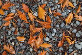 Colourful autumn leafs on a grit — Stock Photo