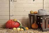Pumpkin and bitter gourd — Stock Photo