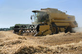 Harvester harvesting wheat — Stockfoto