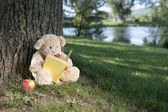 Teddy bear reading a book outside — Stock Photo