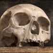 Photo: Old skull on old book