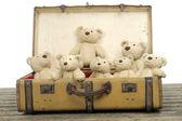 Lots of teddy bears in an old vintage suitcase — Stock fotografie