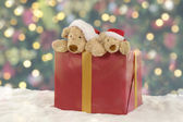 Two teddy bears in a christmas present — Stock Photo