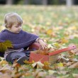 Little girl playing with a suitcase and autumn leaves — Stock Photo #35733219