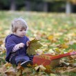 Little girl playing with a suitcase and autumn leaves — Stock Photo #35733259