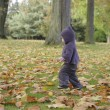 Little toddler in an autumn park — Stock Photo #35733883