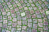Cobblestone grass brick road — Стоковое фото