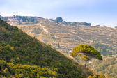 Tree on green hill in rural southern Italy — Stock Photo