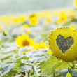 Stock Photo: Sunflower with heart shaped figure on natural bokeh background