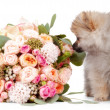 Pomeranipuppy with bouqet of flowers isolated on white backgr — Stock Photo #41876721
