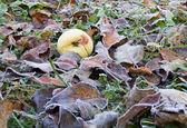 Apple on meadow — Stock Photo