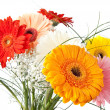 Gerbera daisy bouquet — Stock Photo