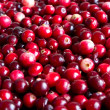 Cranberry background — Stock Photo