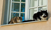 Cats in window — Stock Photo