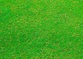 Поле для гольфа — Стоковое фото