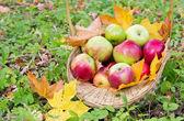 Verse appels in de mand — Stockfoto