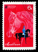 USSR stamp arabian horse — Photo