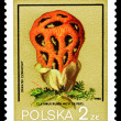 Poland stamp, mushroom — Stock Photo