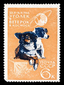 USSR stamp, space dogs Ugolek and Veterok — Foto de Stock