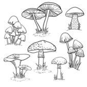 镶有蘑菇 — 图库矢量图片