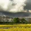 Stock Photo: Rape field put , it put and clouds