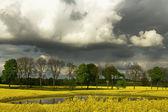 Rape field put , it put and clouds — Stock Photo