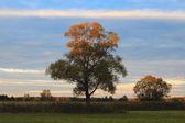 Beautiful Autumn Dawn — Stock Photo