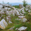 Dolly Sods Wilderness Area ~ West Virginia — Stock Photo