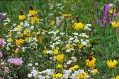 Prairie Flower Mix — Stock Photo