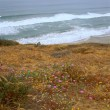 Beach Trail Overlook Torrey Pines Reserve California — Stockfoto #20154613