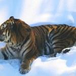 Постер, плакат: Siberian Tiger Cameo