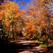 Stock Photo: Scenic Roadway in Superior National Forest